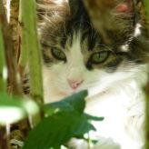 Mon chat adoré, Angie…